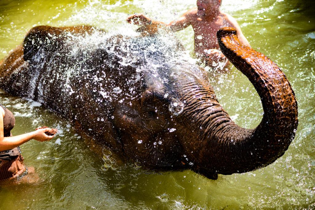 Elefantes en Green Hill Valley, mi experiencia   Mevout