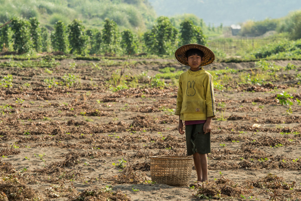 Child working in peanuts field
