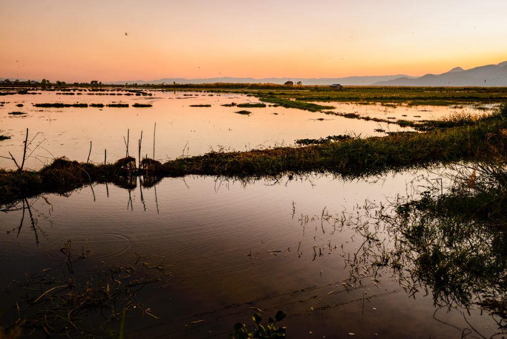 Inle lake sunset rice fields